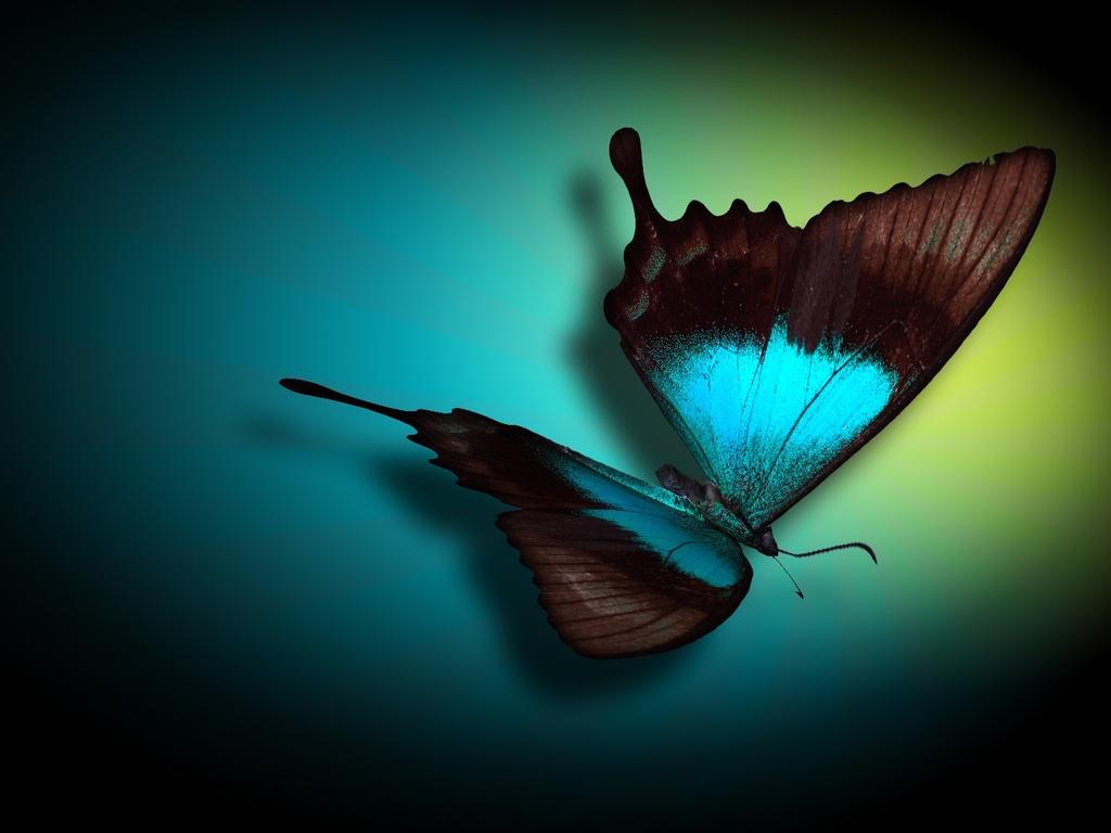 Neon butterfly wallpaper   ForWallpapercom 1024x768