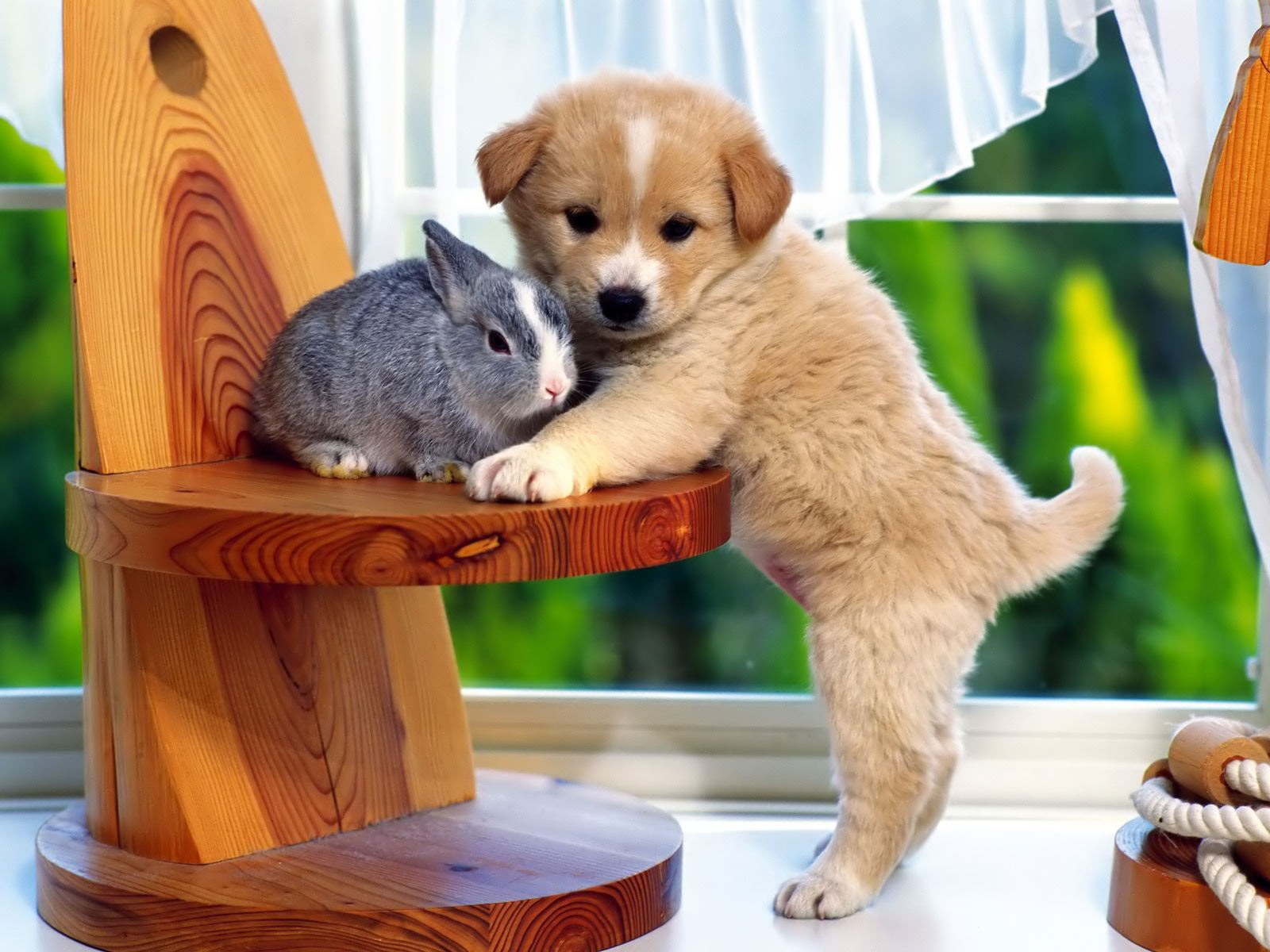 Puppy And The Bunny desktop wallpaper 1600x1200
