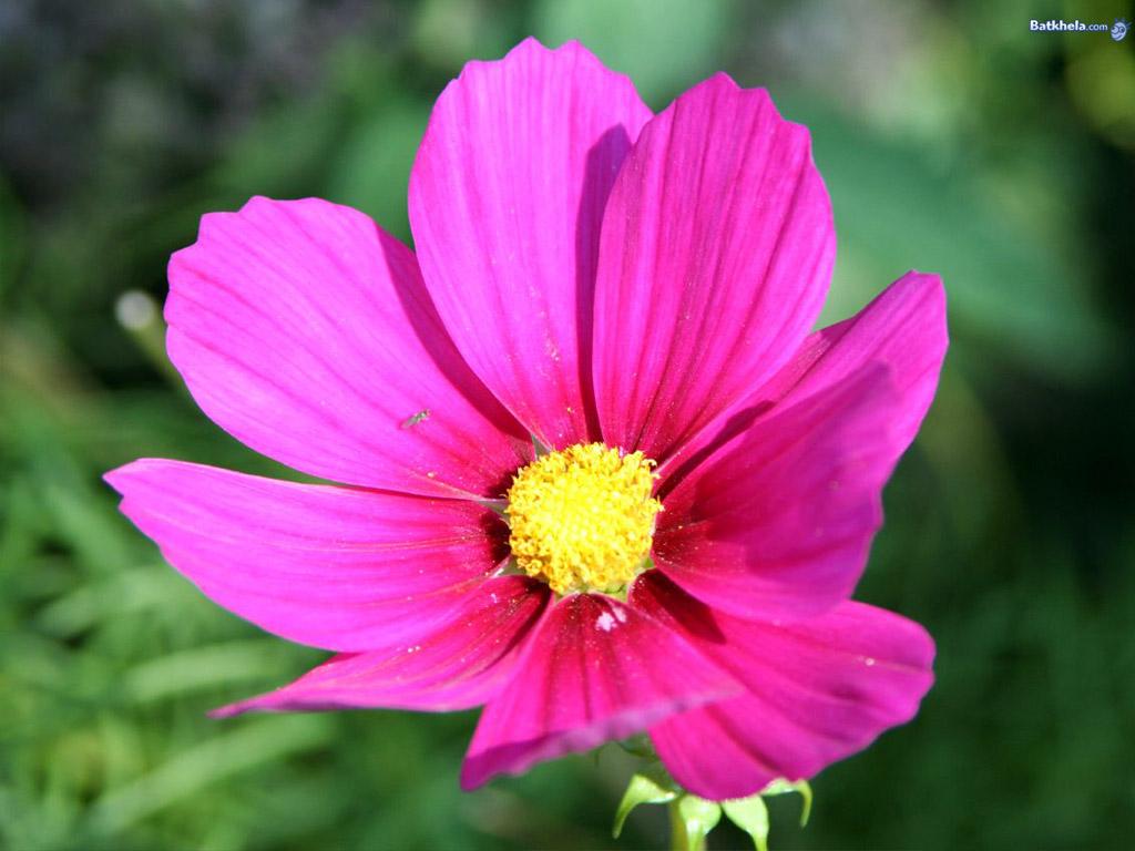 pretty flowers   Flowers Wallpaper 248165 1024x768