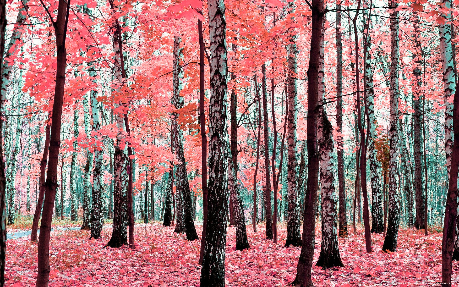 birch tree wallpaper traditional - photo #31