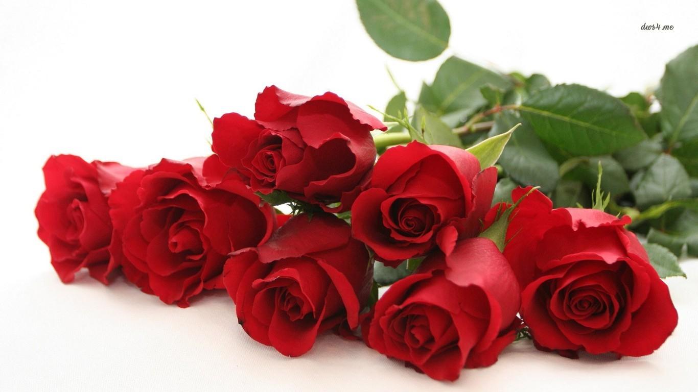 Red Roses Wallpaper Flower Wallpapers 7324