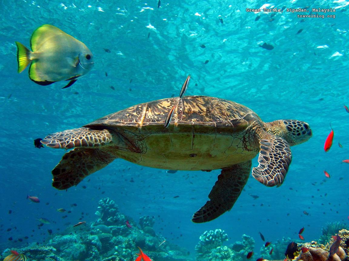 Sea Life   Sea Life Wallpaper 32310781 1152x864