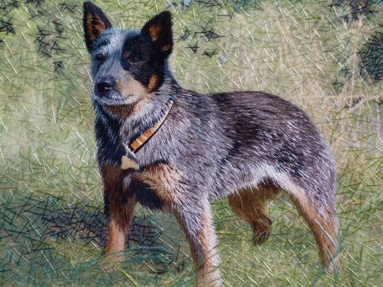 blue heeler Wallpaper and Background Image 1600x1200 ID453428 1600x1200