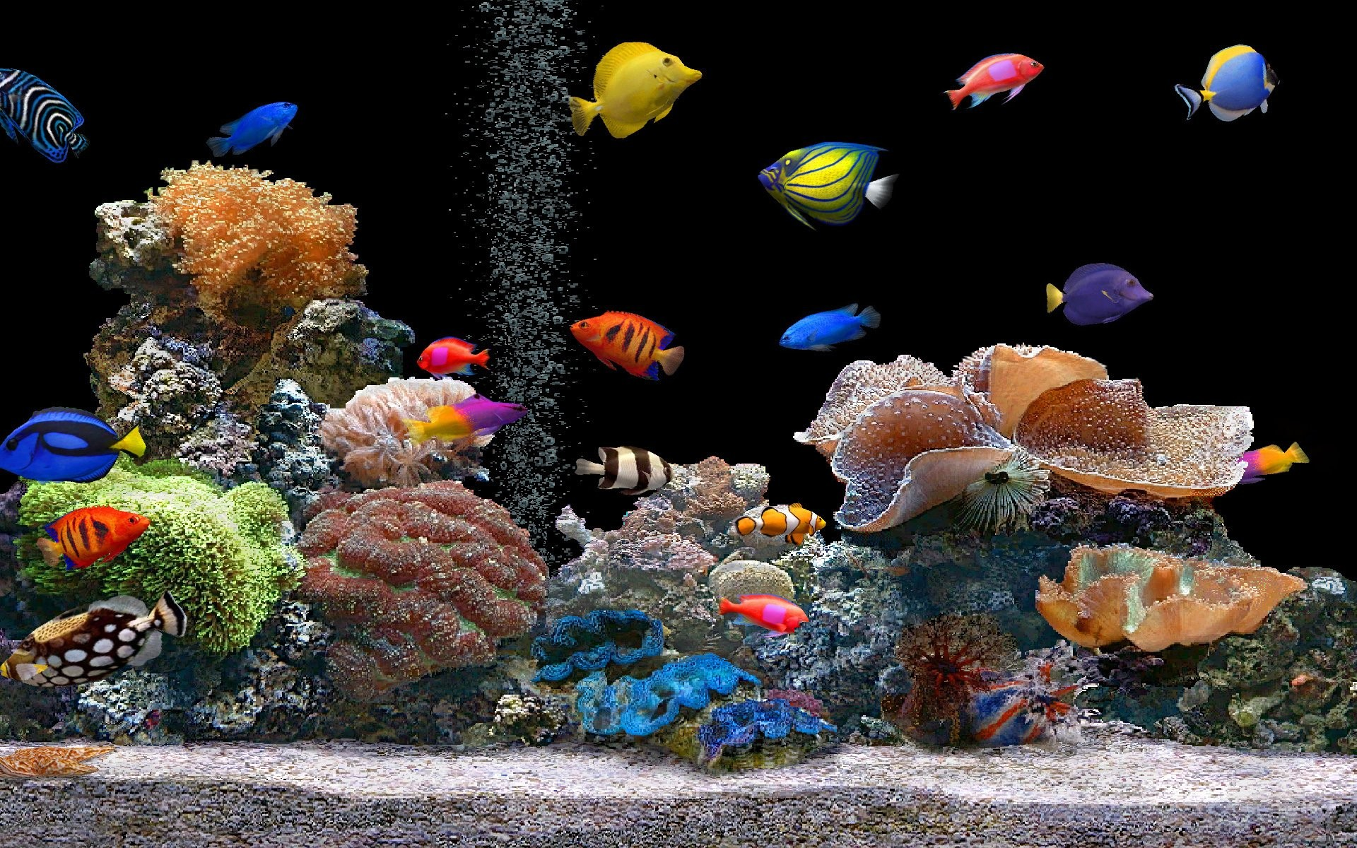 Saltwater aquarium - Nature Animals Aquarium Coral Saltwater Fish Wallpaper Background