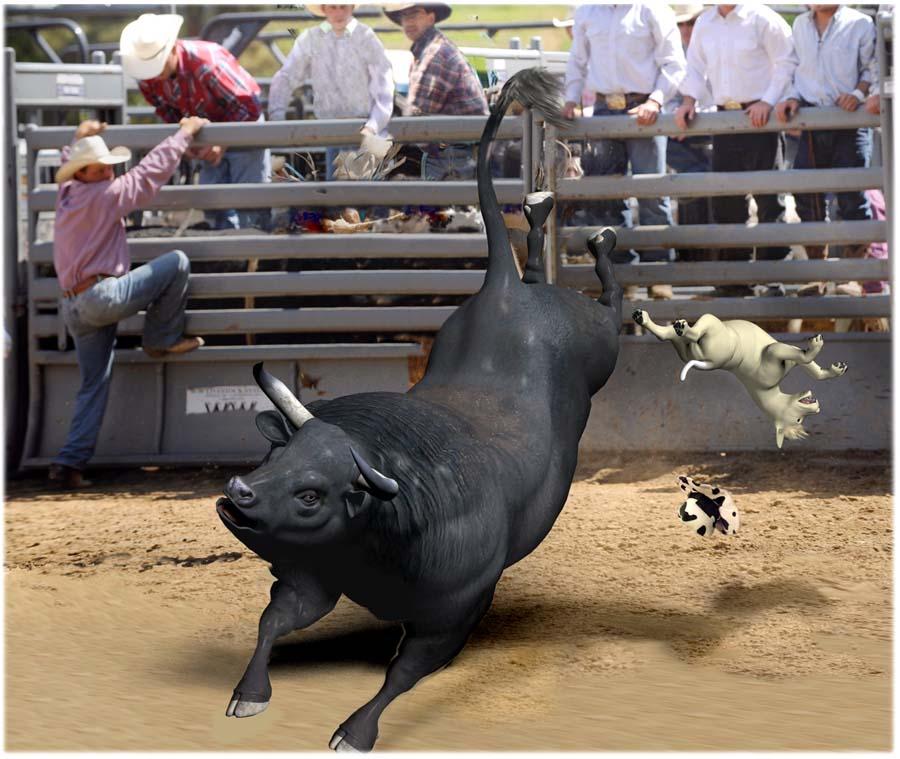 bull riding event [900x759