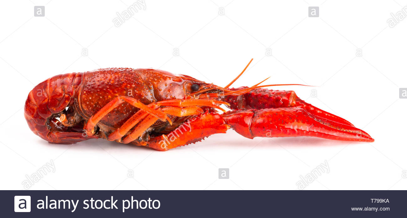 Cooked Red Crawfish Isolated on a White Background Stock Photo 1300x697
