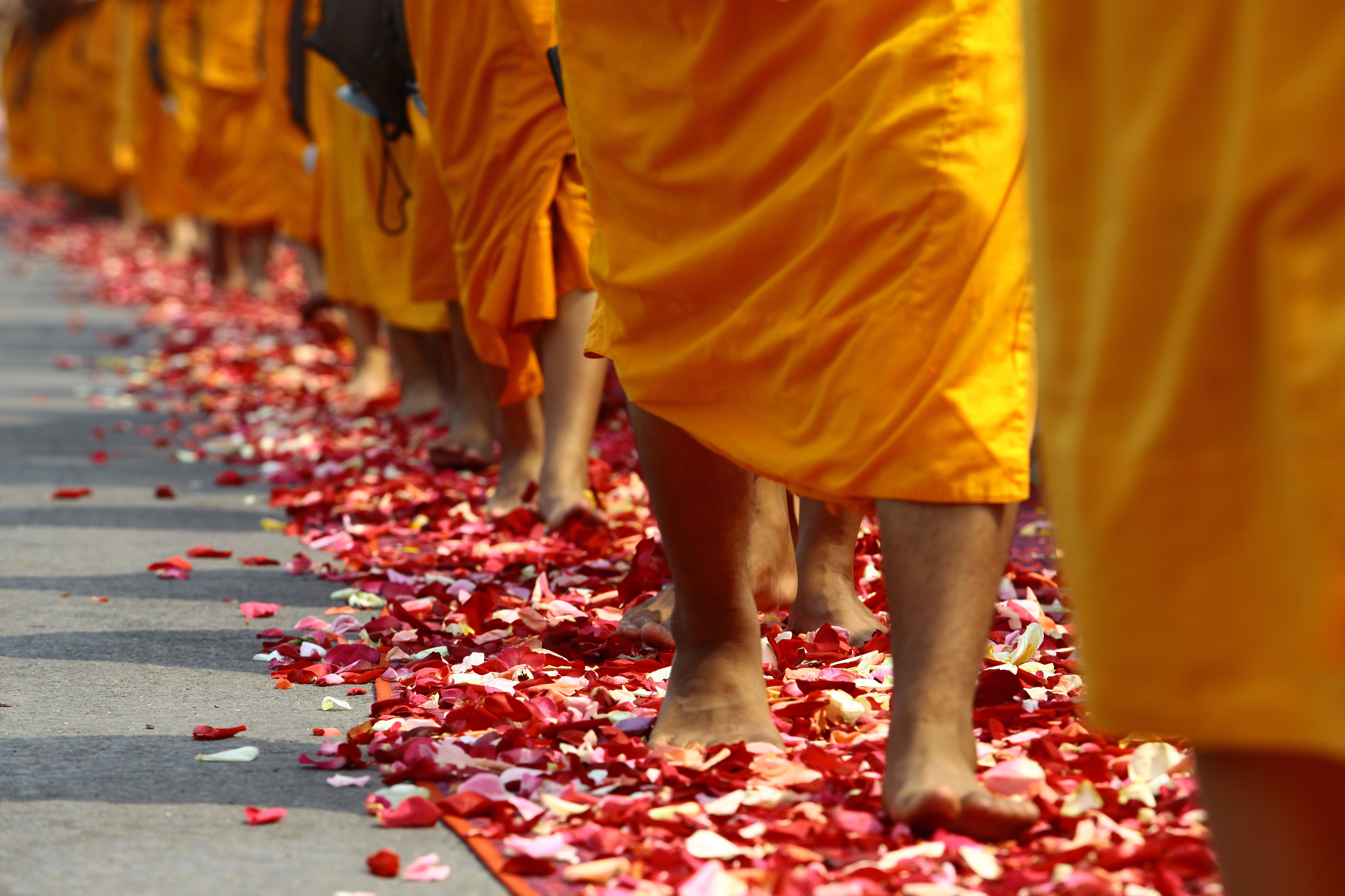 monk people walking on red and white flower petals image Peakpx 5616x3744