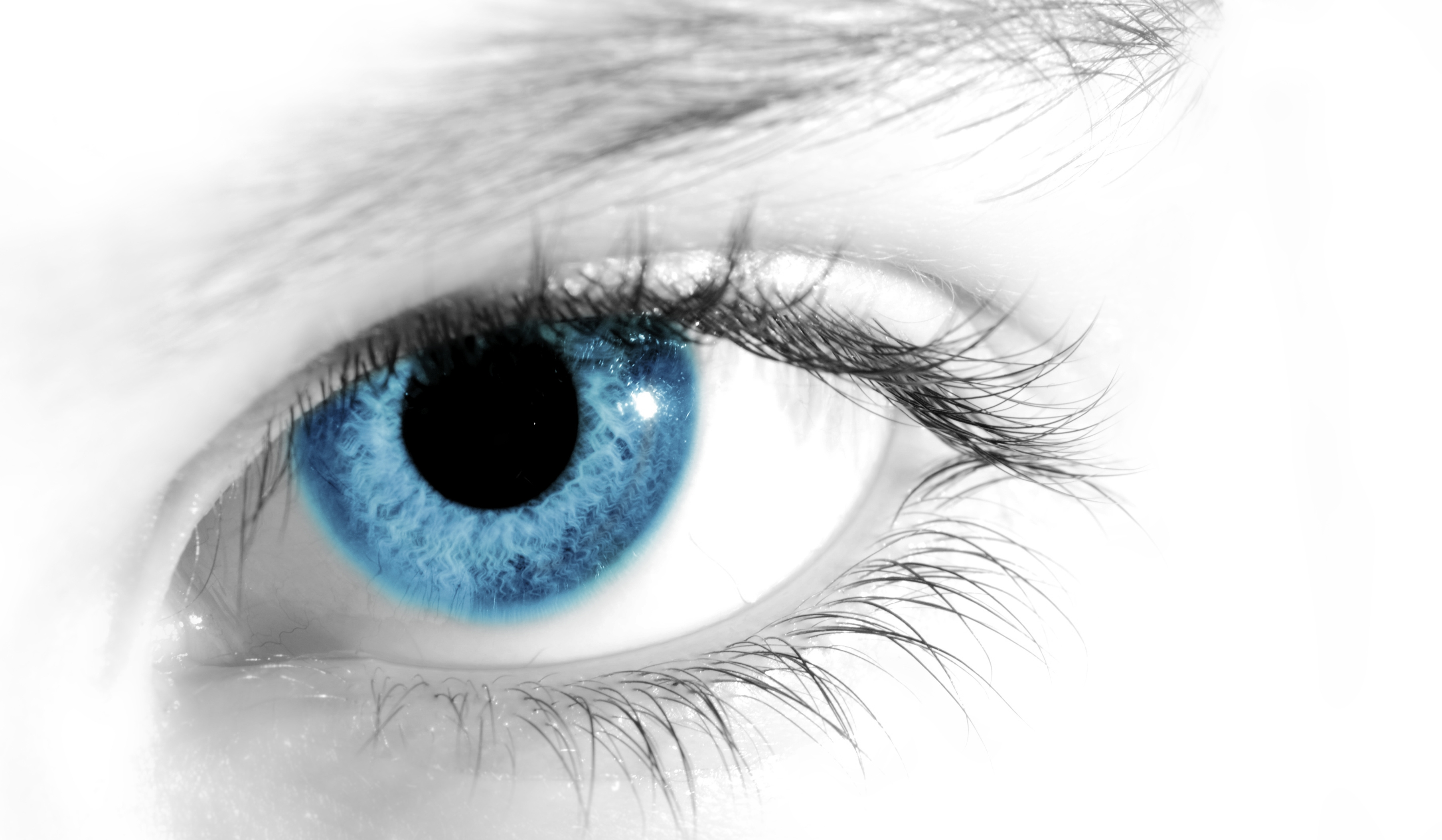 Blue Eye Wallpaper Background 5770 3614x2106   uMadcom 3614x2106