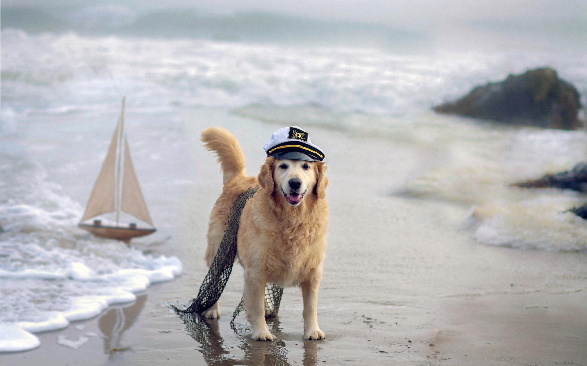 собака песок вода животное природа  № 956867  скачать