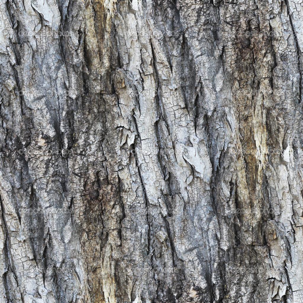 white birch bark wallpaper