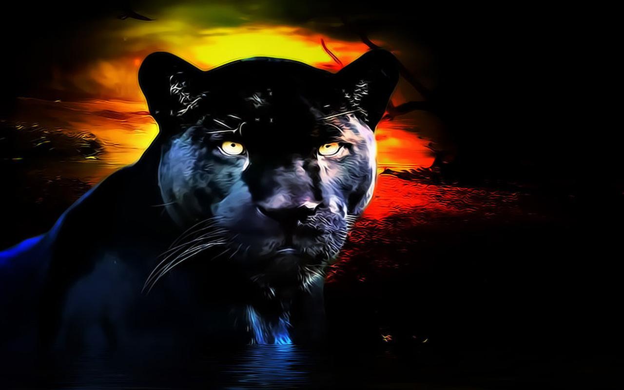 Animal   Black Panther Animal Black Cat Panther Wallpaper 1280x800