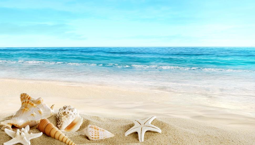 seashells sea the beach shells sand sand beach wallpaper and 970x550