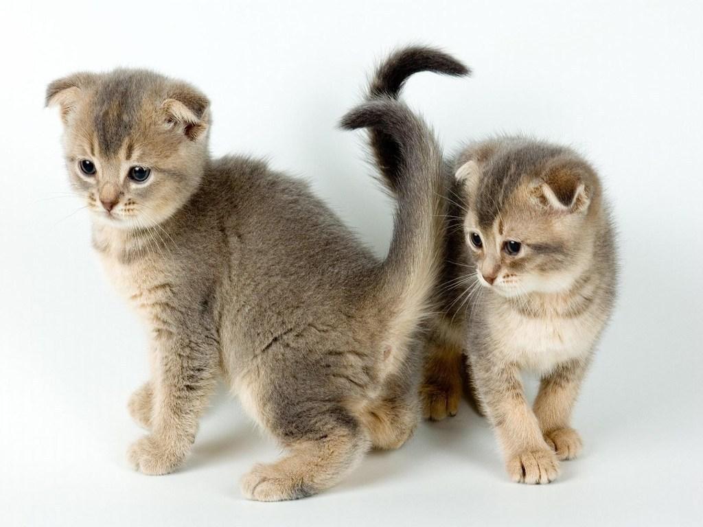 kittens   catsparrots and butterflies Wallpaper 22814240 1024x768