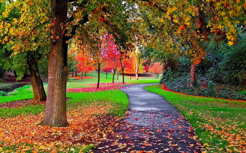 Labels Autumn Desktop Autumn Desktop Wallpapers autumn picture 1440x900