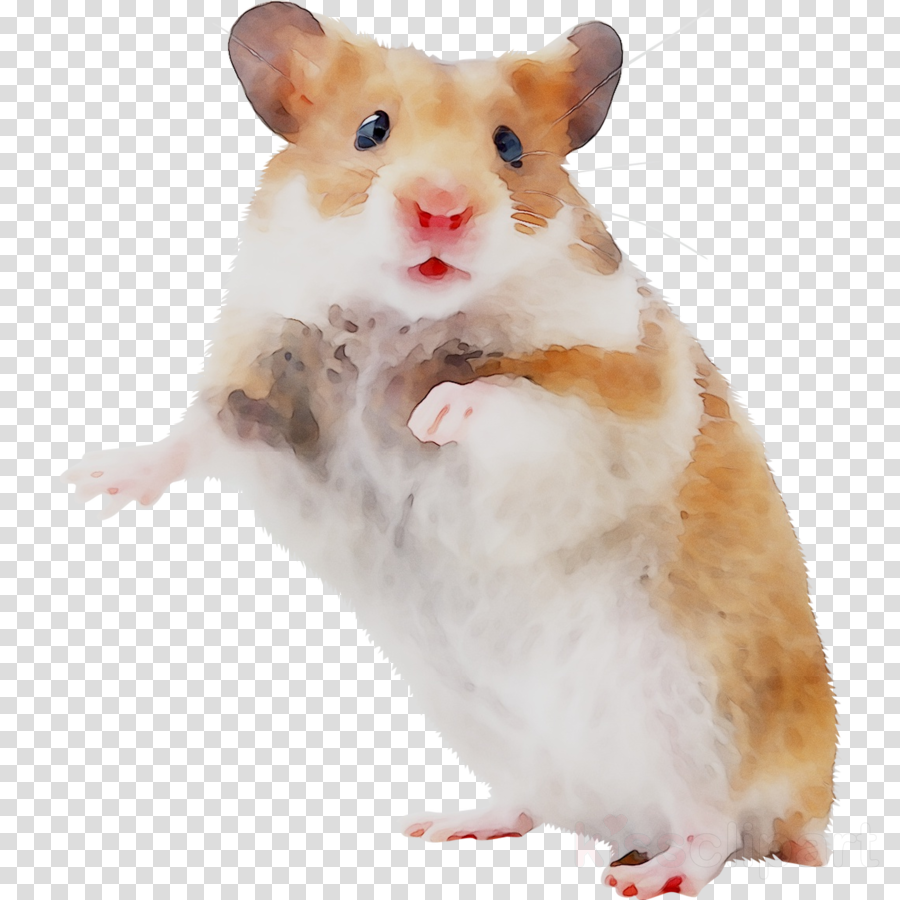 Hamster Background clipart   Rat Mouse transparent clip art 900x900