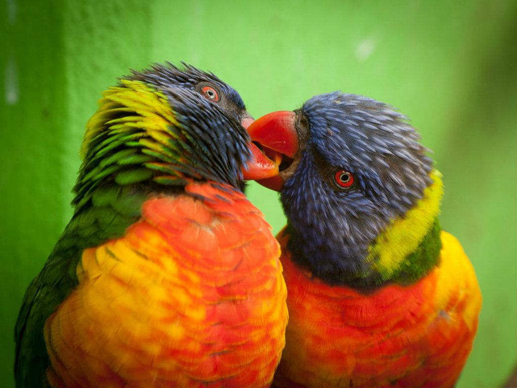 Xs Wallpapers Hd Love Birds Wallpapers: Wallpaper Love Birds