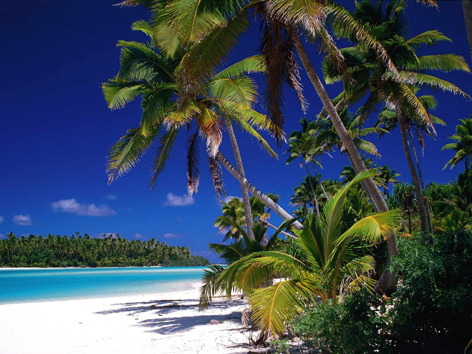 Beautiful Wallpapers For Desktop Palm tree wallpapers hd 1600x1200