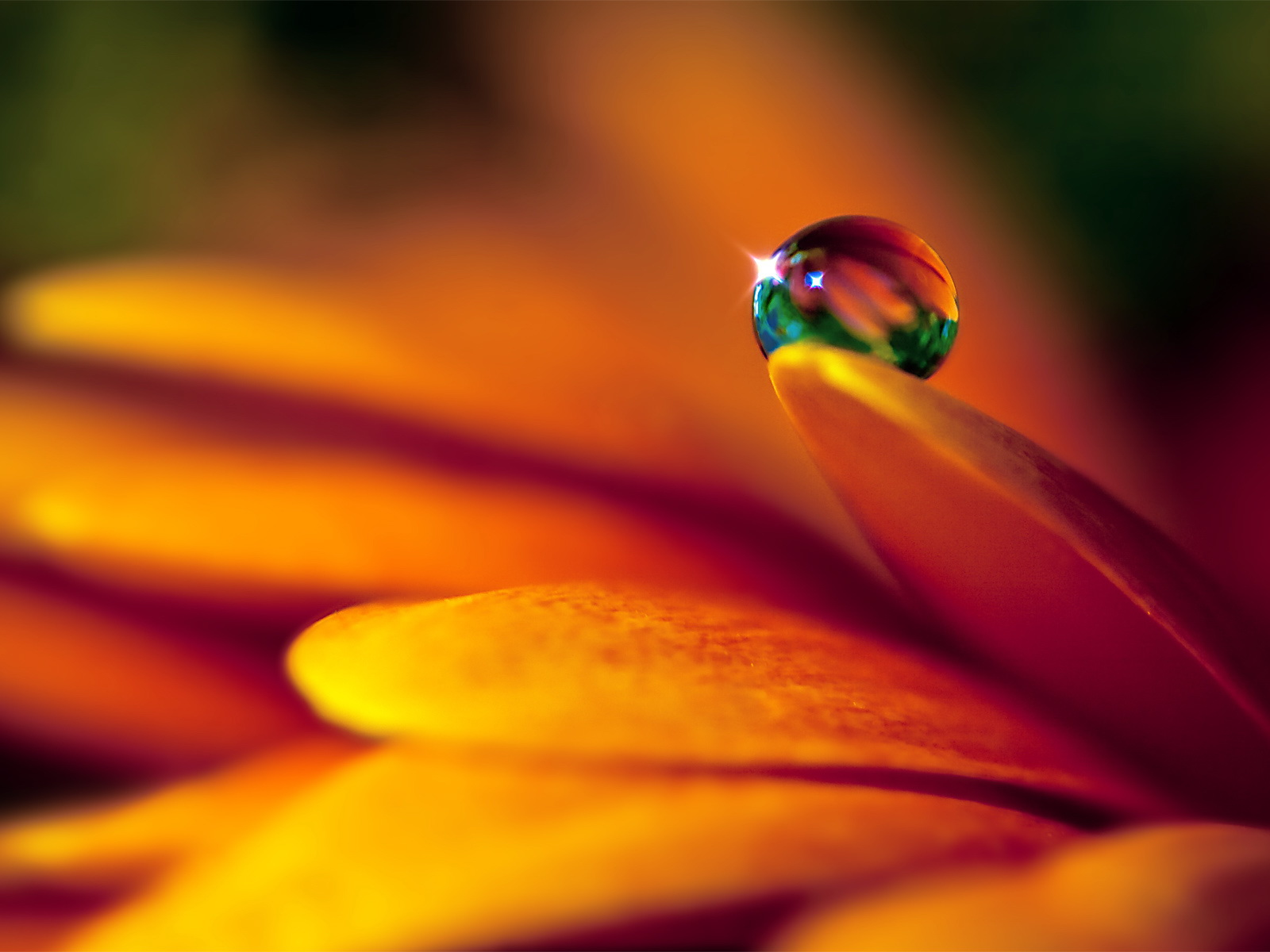 Flowers Droplets Wallpapers HD Pictures One HD Wallpaper 1600x1200