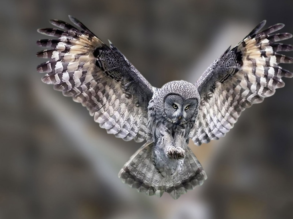 Owl Images HD HD Wallpapers Pictures Images Backgrounds 1024x768