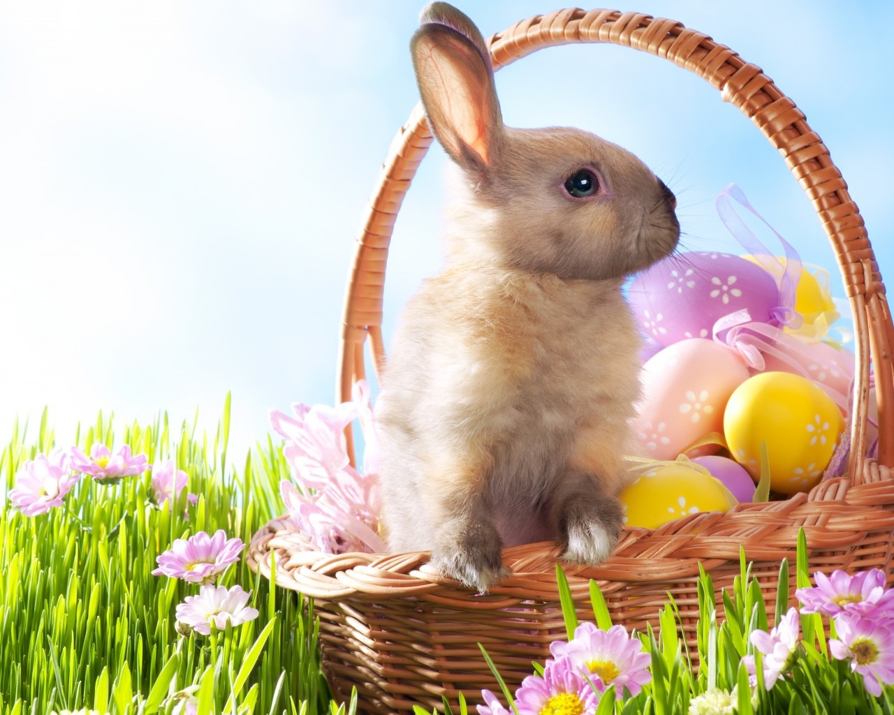 cute easter bunny desktop - photo #20