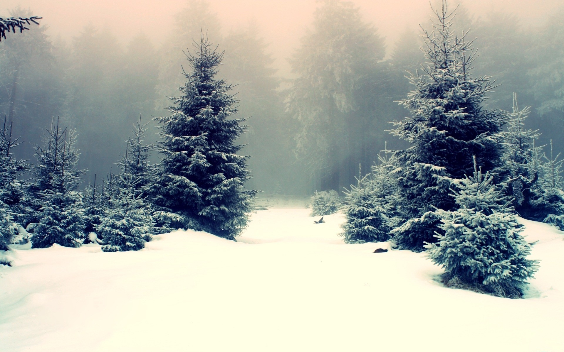 Group Of Hd Snow Forest Wallpaper