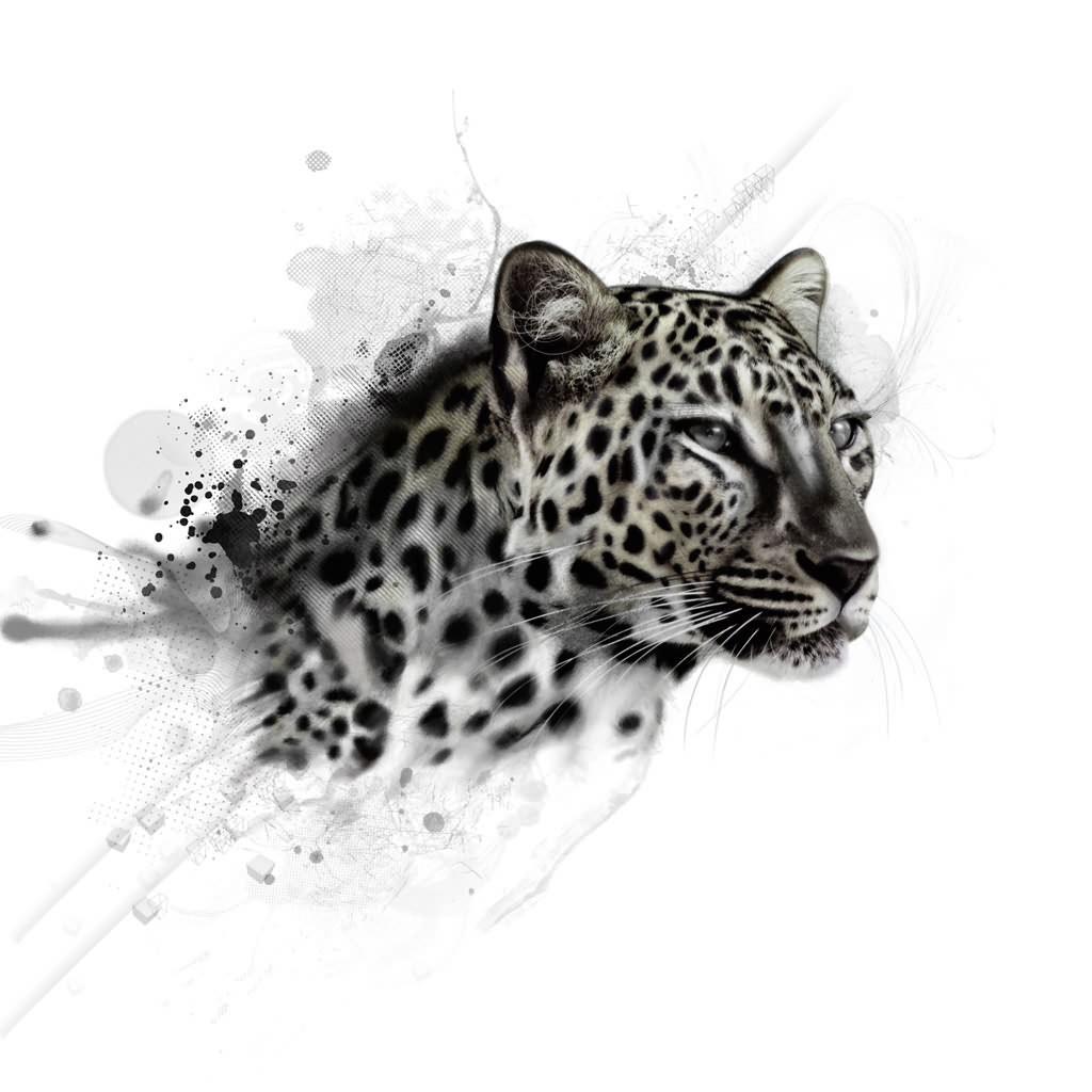 Wallpapers Tribal Animals Animal Tattoo 1024x1024: White Leopard Wallpaper