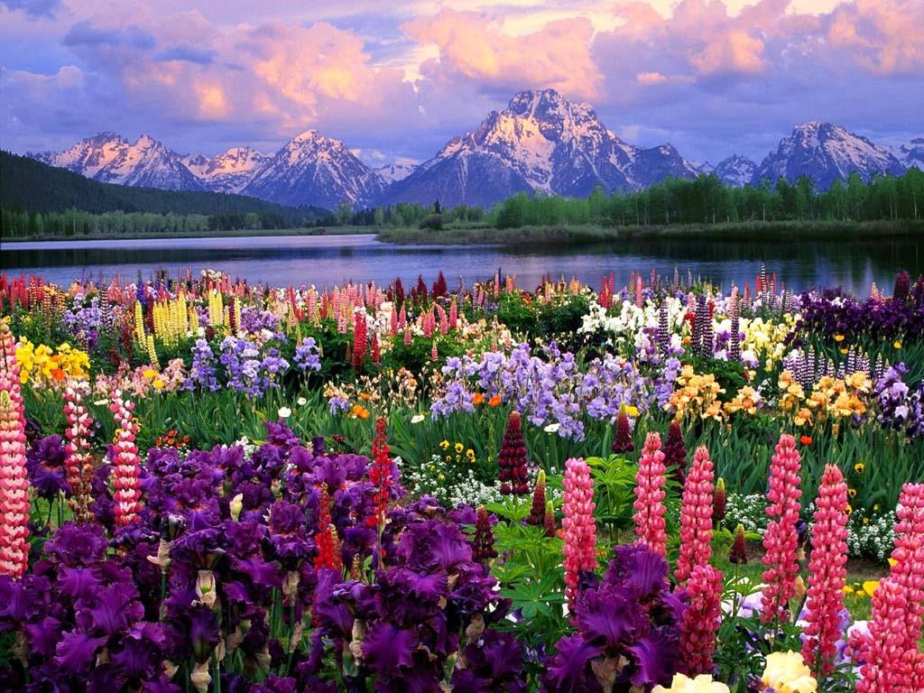 More Beautiful Flower Field Wallpaper | FLgrx Graphics