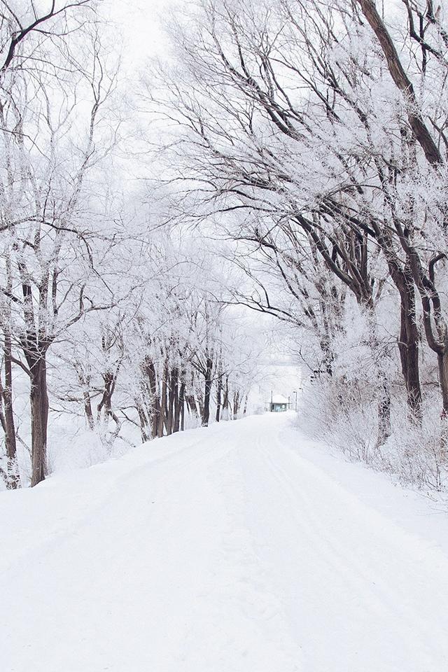 Winter Road Romantic Nature Snow White iPhone 4s Wallpaper 640x960