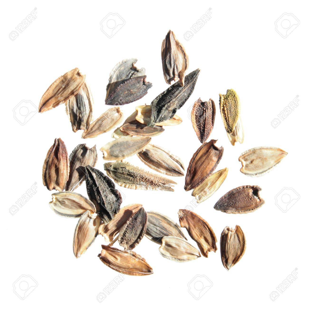 Yellow Zinnia Zinnia Elegans Seeds On White Background Stock 1300x1300