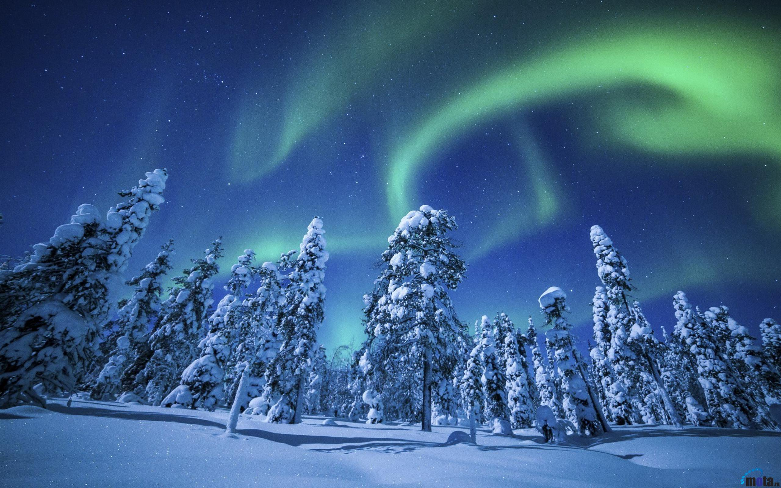 Desktop wallpapers Northern lights over pine forest 2560x1600
