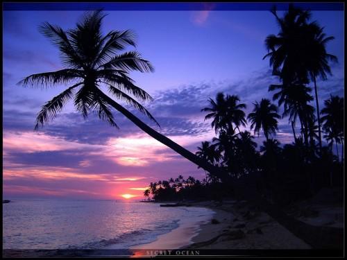 Ocean Screensaver Screensavers   Download Secret Ocean Screensaver 500x375