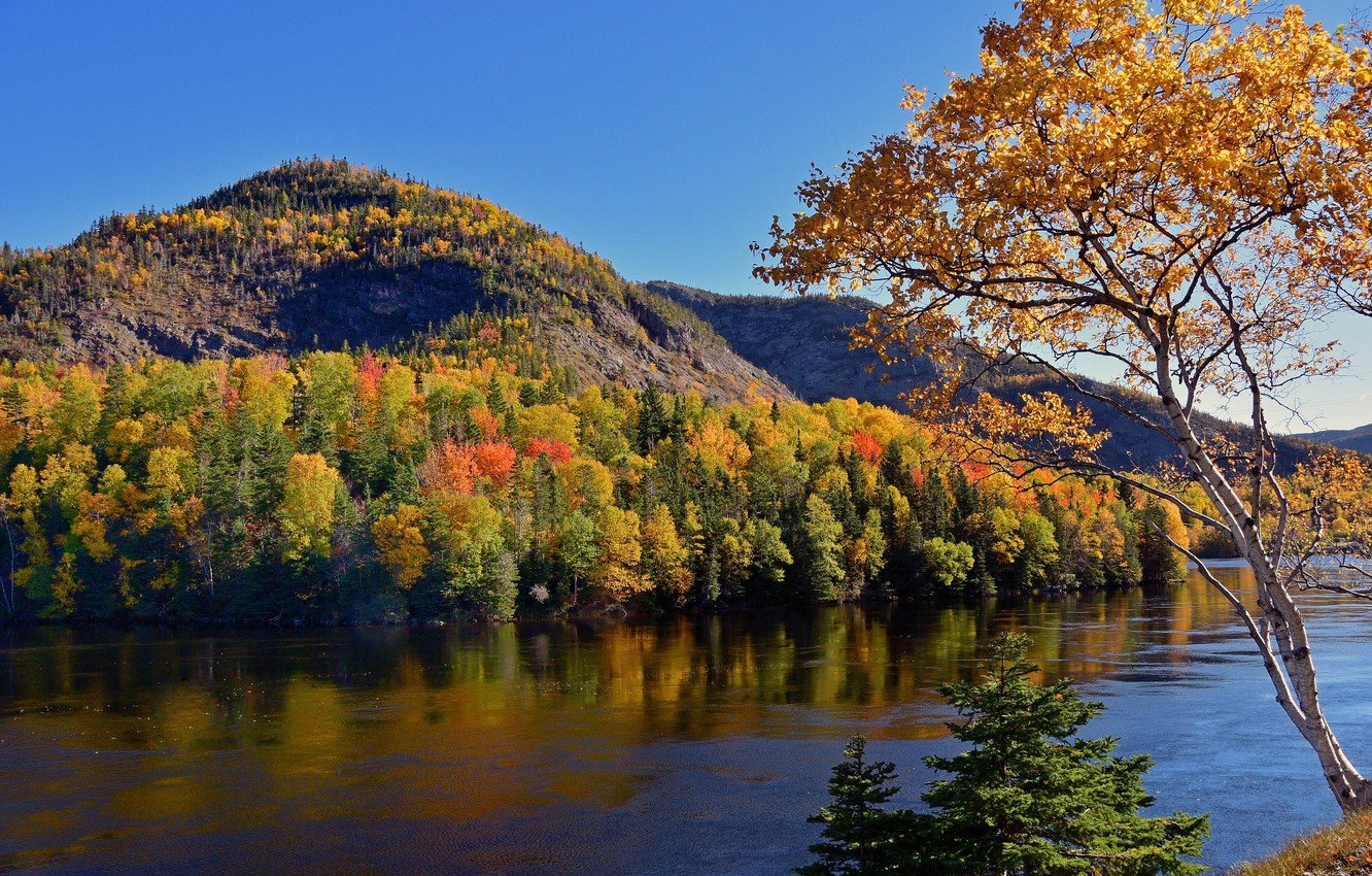 Wallpaper autumn forest trees mountains river Canada Canada 1332x850