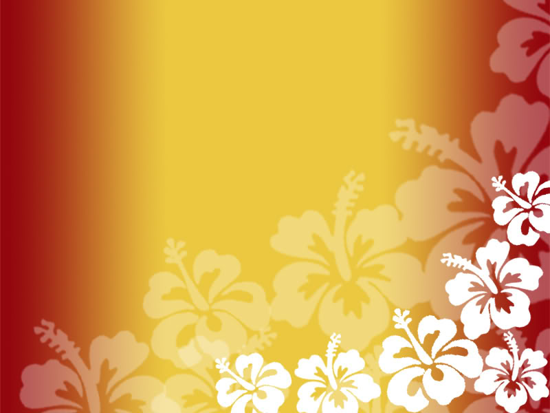 real hibiscus background wwwpixsharkcom images