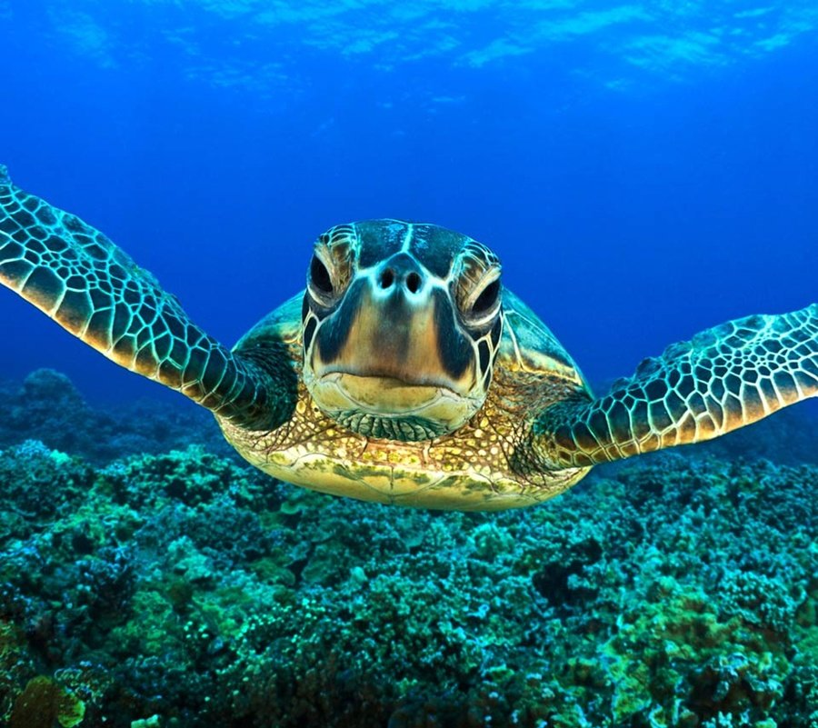 Top 27 Sea Animals Wallpapers IN HD 900x801
