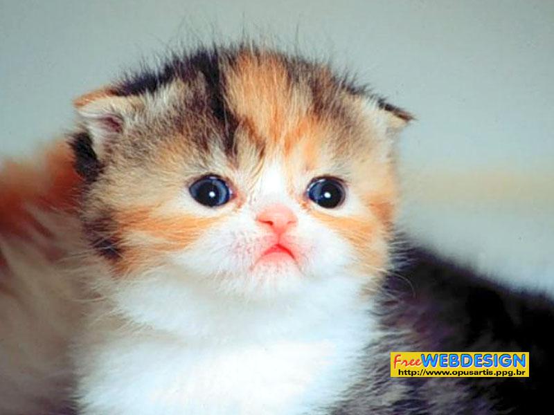 50 Free Cat Wallpapers And Screensavers On Wallpapersafari