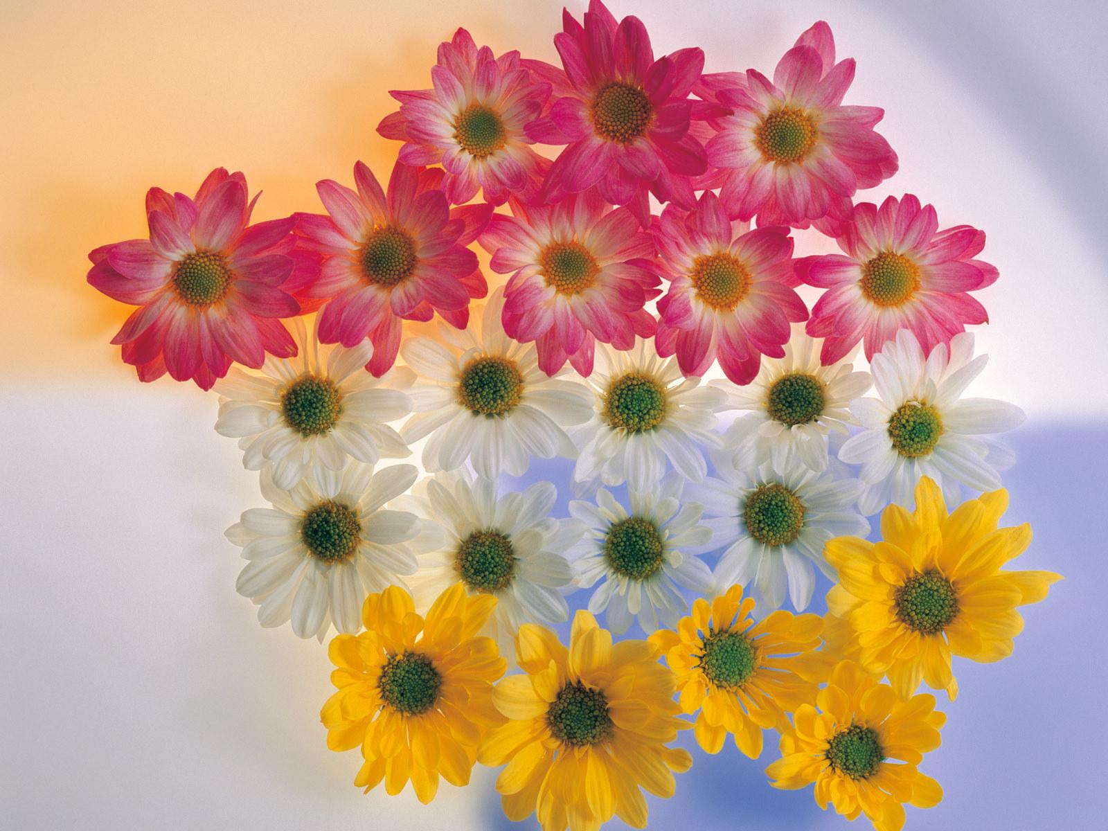 Nice Pictures Of Flowers Wallpapers Wallpapersafari