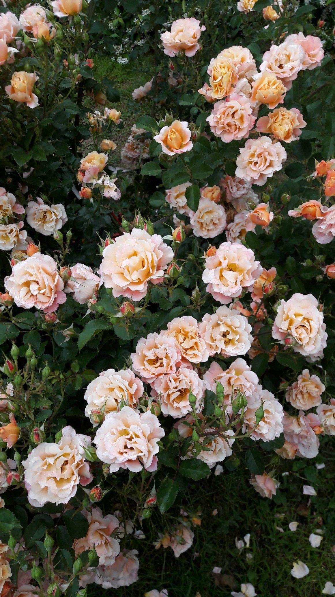 28 Aesthetic Flowers Wallpapers On Wallpapersafari