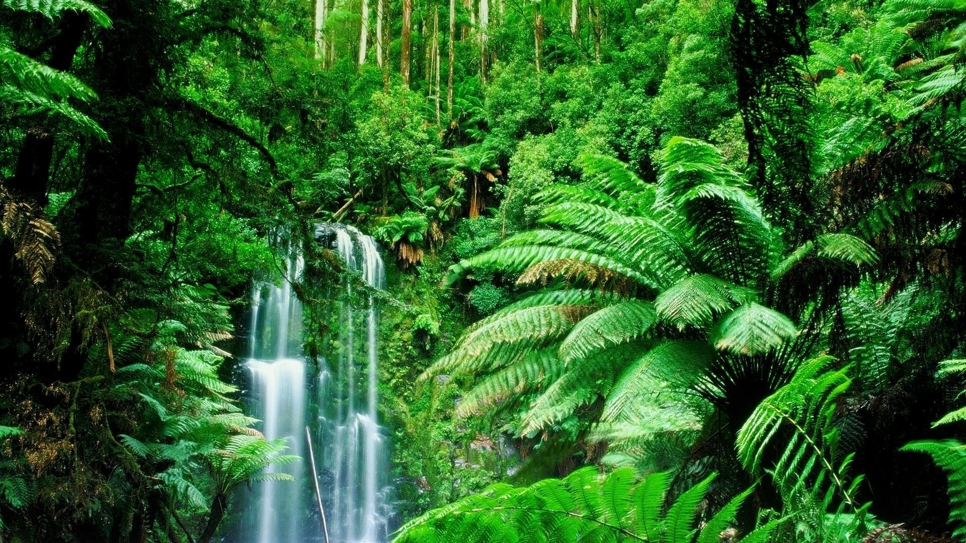 Green landscapes trees jungle forest rainforest wallpaper 1920x1080 1920x1080