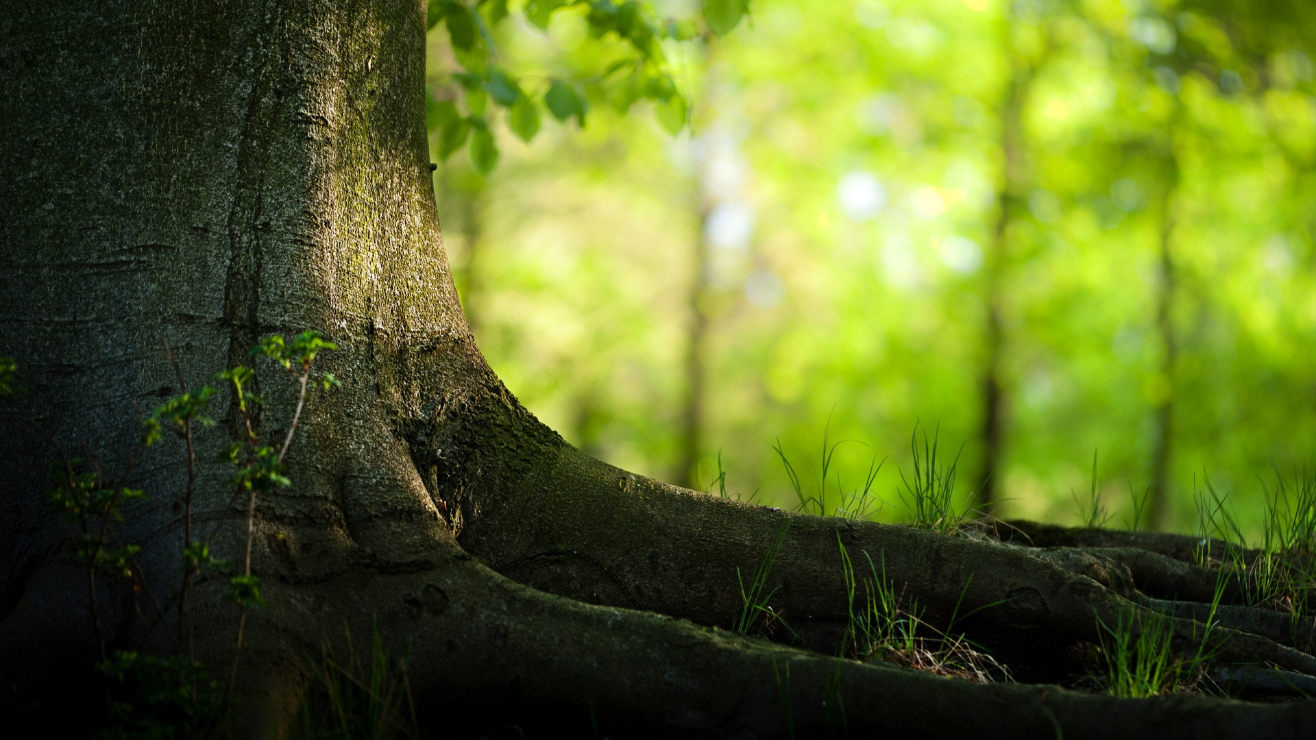 green forest wallpapers green forest wallpapers green forest hd 1920x1080