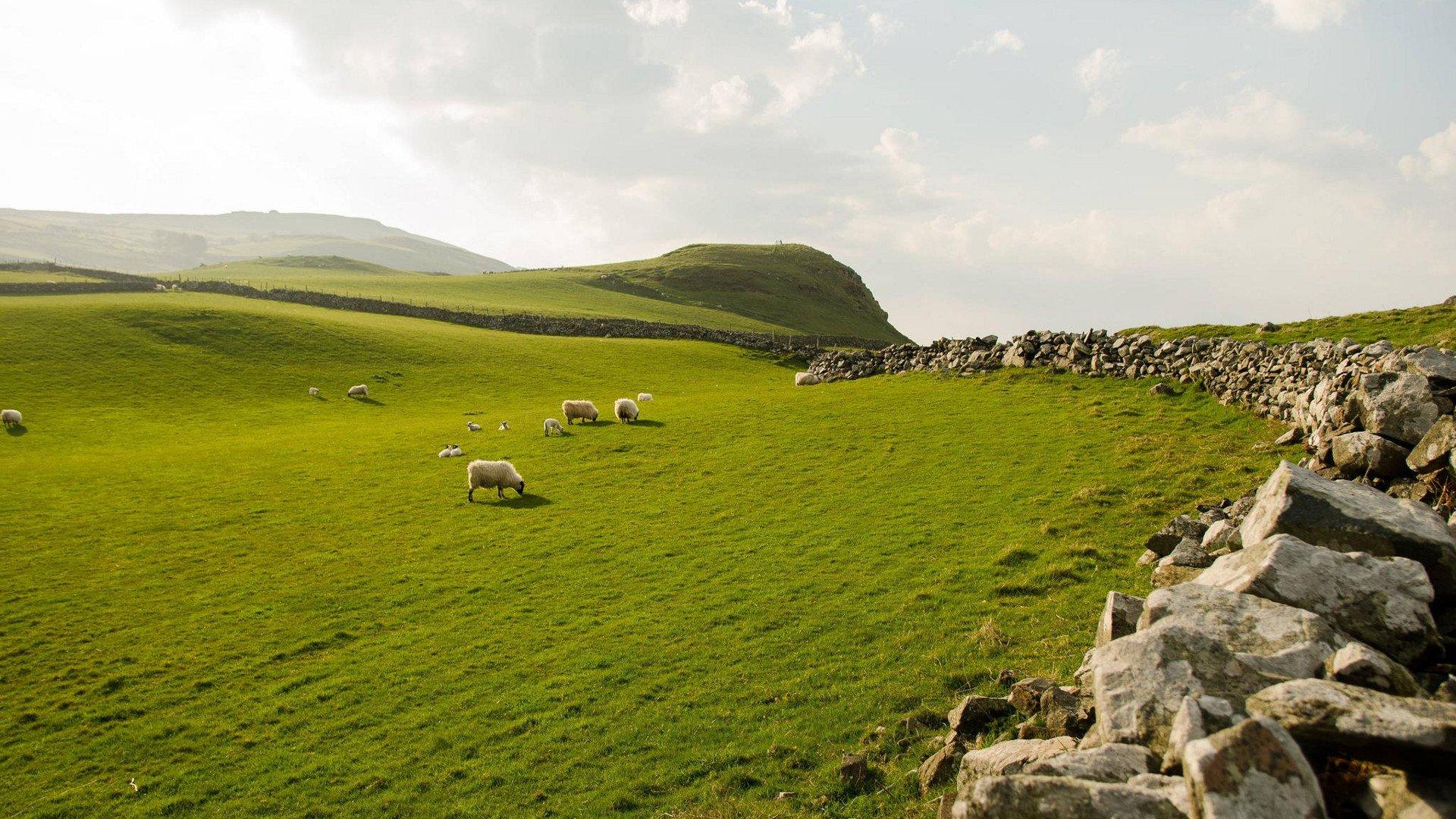 Sheep Grazing in Northern Ireland [1920x1080] wallpapers 1920x1080