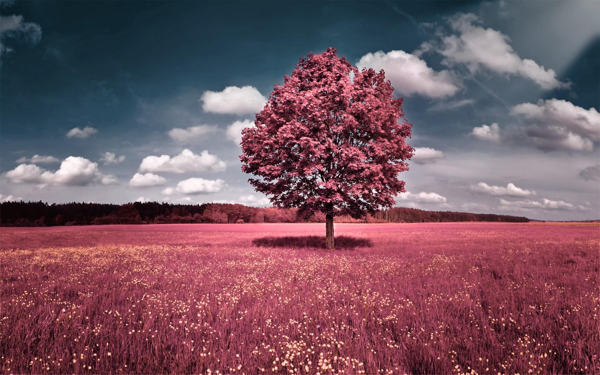 Pink Full HD Desktop Wallpaper   Wallpaper High Definition High 1920x1200