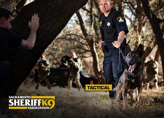 Police K9 Wallpaper Sacramento sheriffs k9 577x416