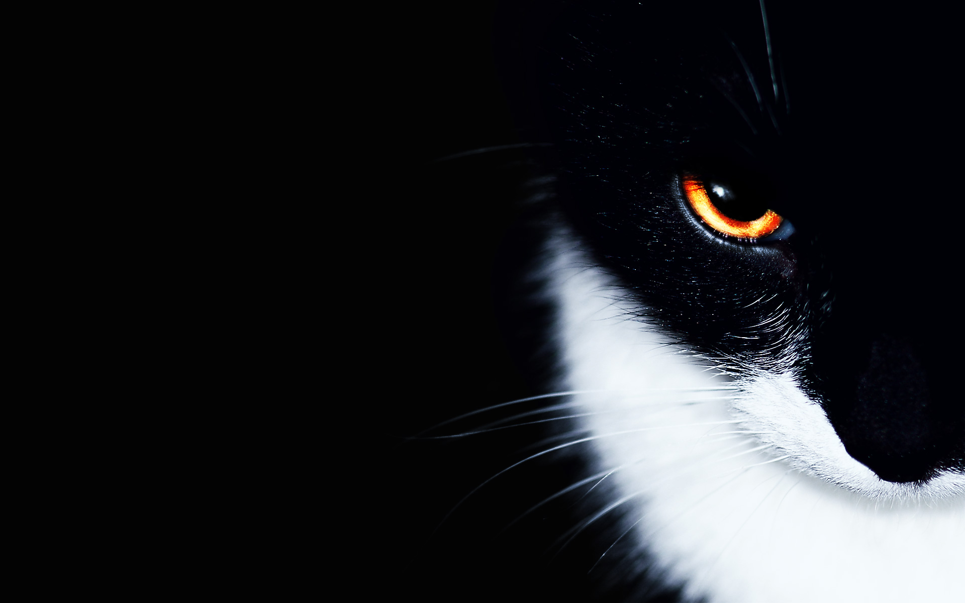 Beautiful Eye Cat Wallpaper Background Wallpaper with 1920x1200 1920x1200