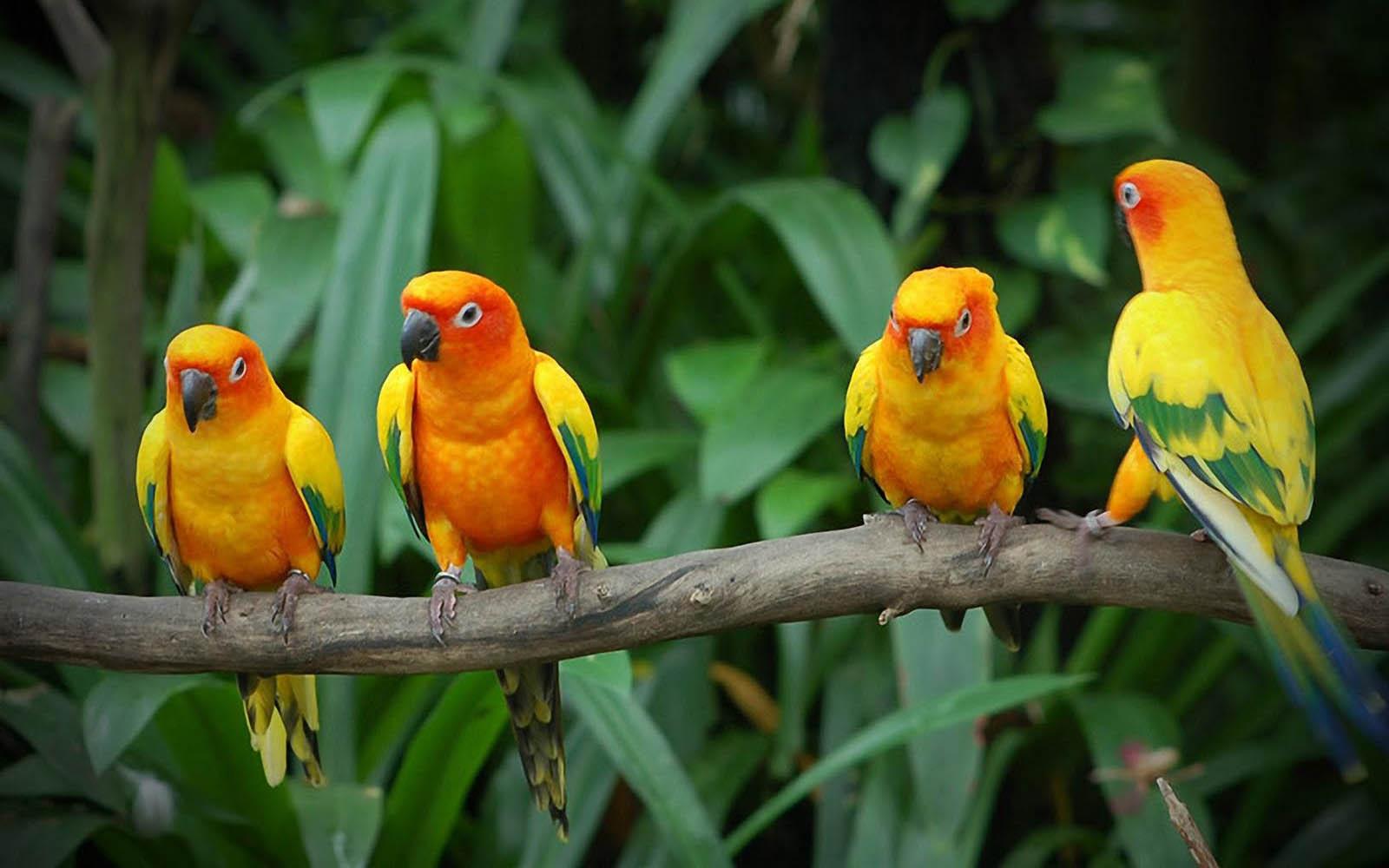 wallpapers Love Birds Desktop Wallpapers 1600x1000