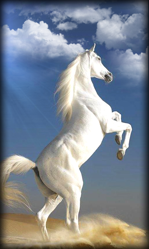 Free Download Horse Live Wallpaper App Download For Android