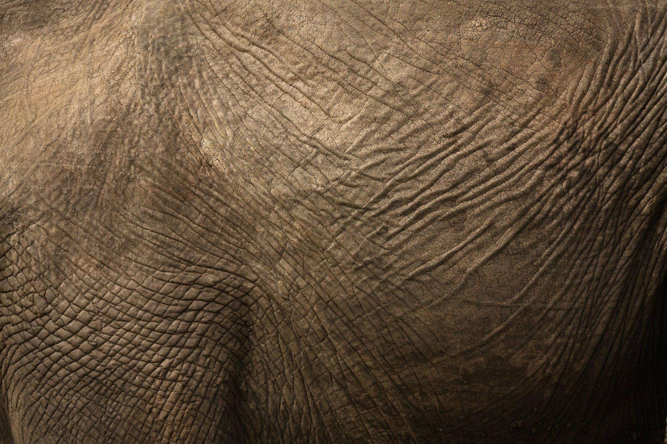 Elephant Hide [3000x2000] Wallpaper Wallpapers Pictures Piccit 2160x1440