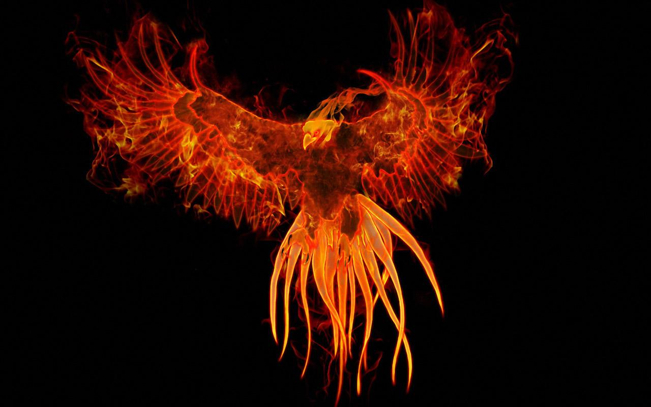 50+] Phoenix Wallpaper Store on WallpaperSafari