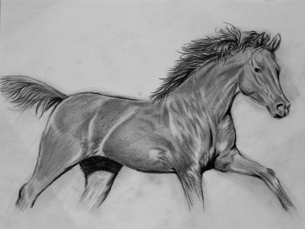Animals Wallpapers black and white horse drawings 1024x768