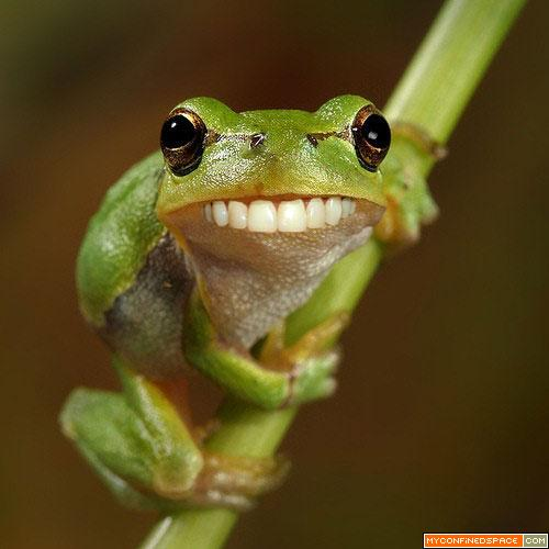 Funny Frog New Photos 2011 Funny And Cute Animals 500x500