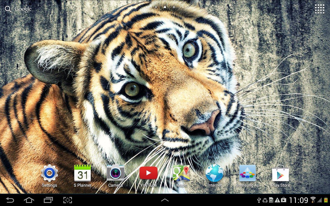live tiger wallpaper wallpapersafari